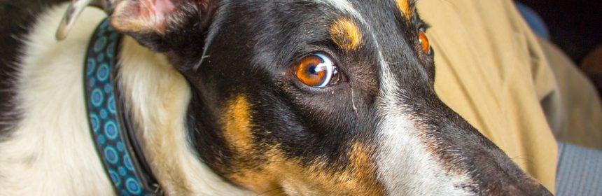 +как перестать бояться собак, +как узнать +о прошлой жизни человека, боязнь собак, полина сухова, причины страха, прошлая жизнь человека, прошлые жизни, прошлые жизни человека, регрессивный гипноз, тонкий мир